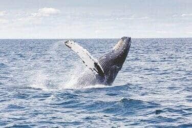 walvissen spotten op vakantie