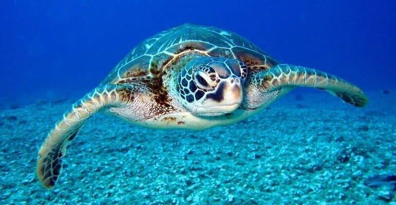 snorkelen bali