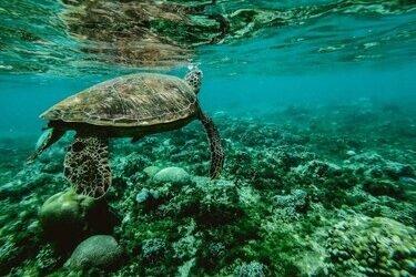 snorkelen schildpadden bali