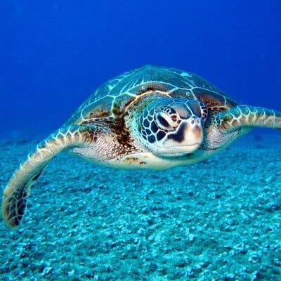snorkelen bali indonesie