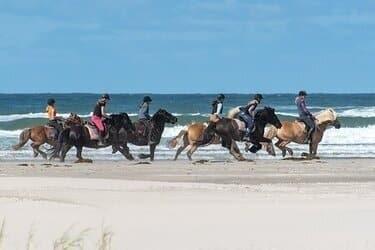 terschelling paardrijden